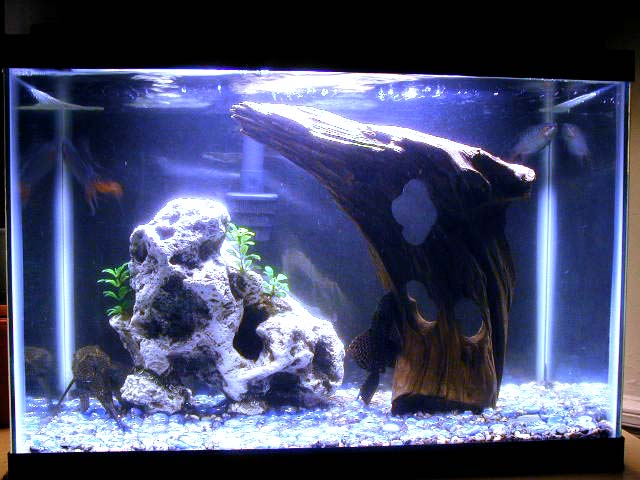 fish tank filter. Complete Fish Tank with Lamp,