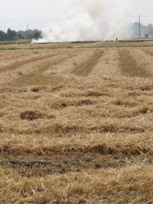 Burning wheat fields in Gyoda