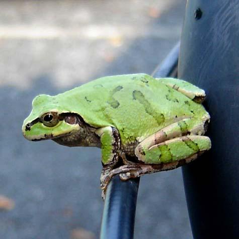 Cute frog on my bike